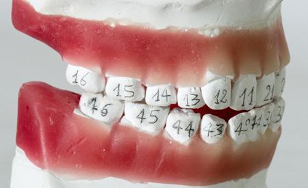 Человеческие зубы по номерам