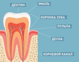Коренные зубы у детей - когда вырастают? Фото
